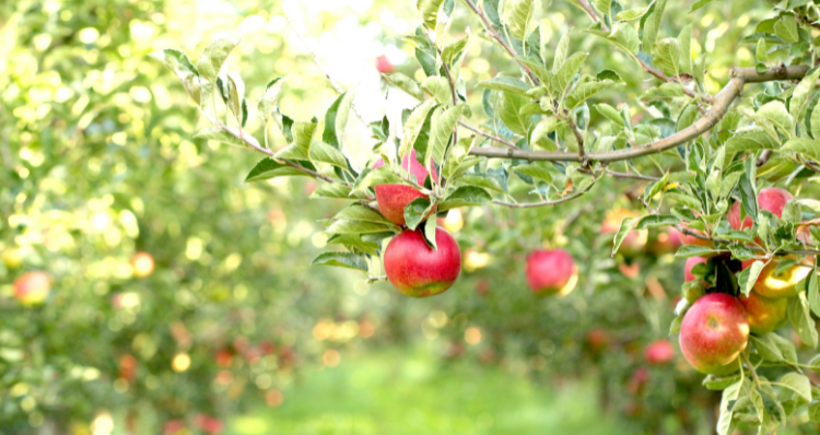 11 of the Best Apple Orchards Near Portland, Mapped