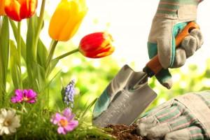 gardening - hi res - resized