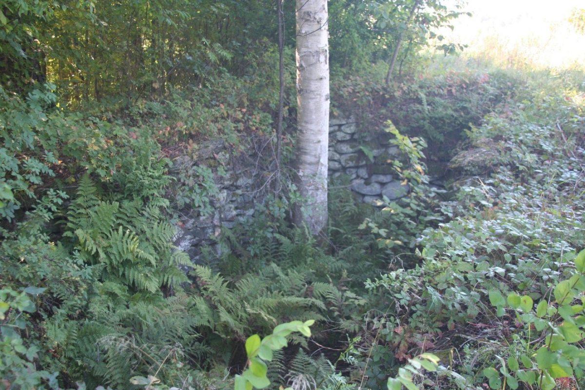 Woods, Sweet Farm, Johnson, Vermont