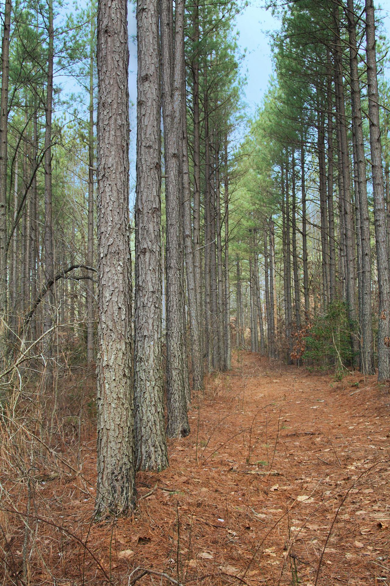 Oakley Forest. GA0252_4