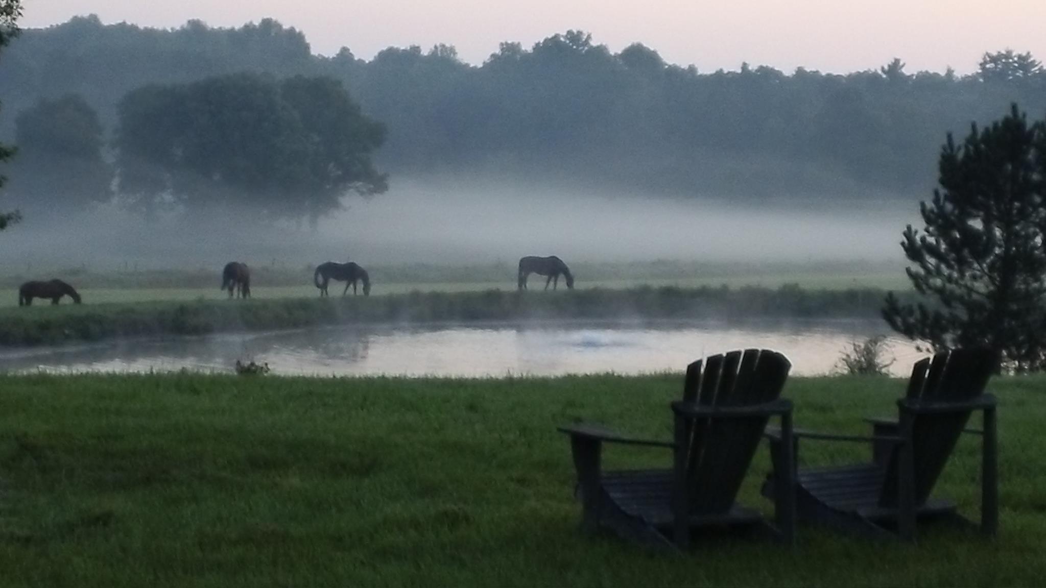 Asaph Drake horses