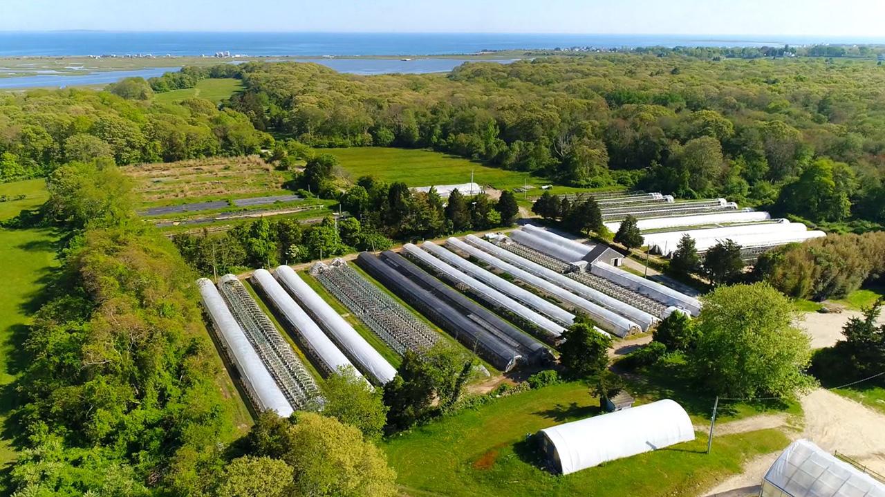 Allens Pond Estate and Nursery