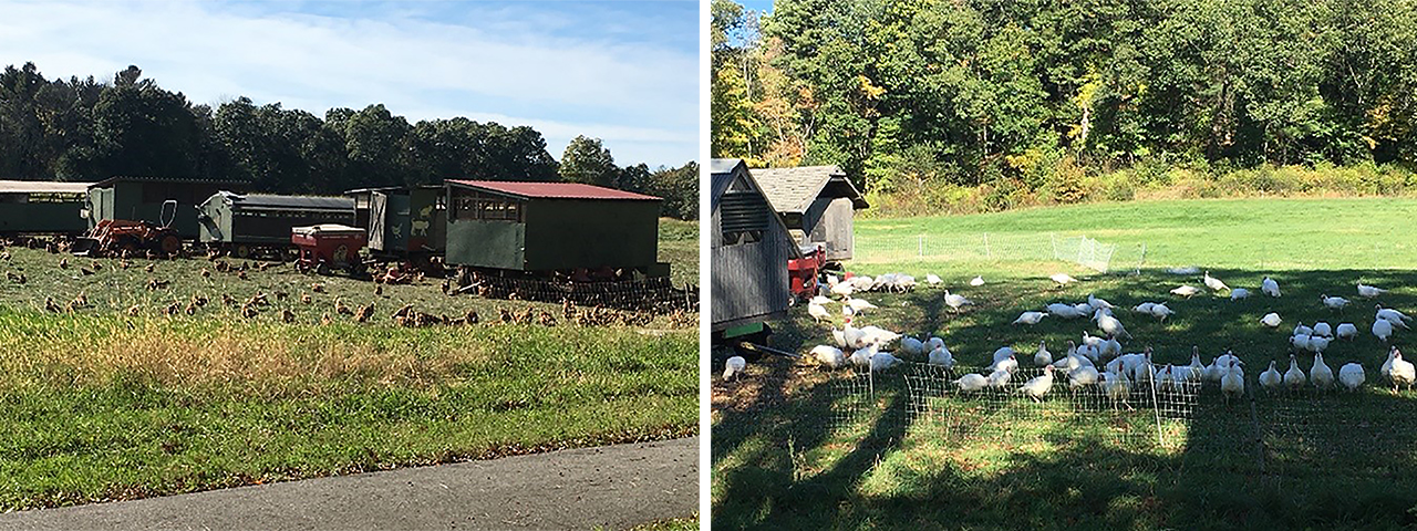 Codman Farm in Lincoln, MA
