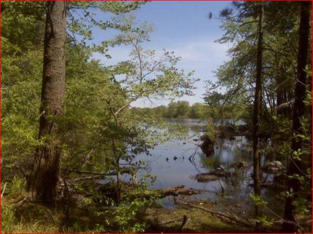 Cobb Memorial Forest