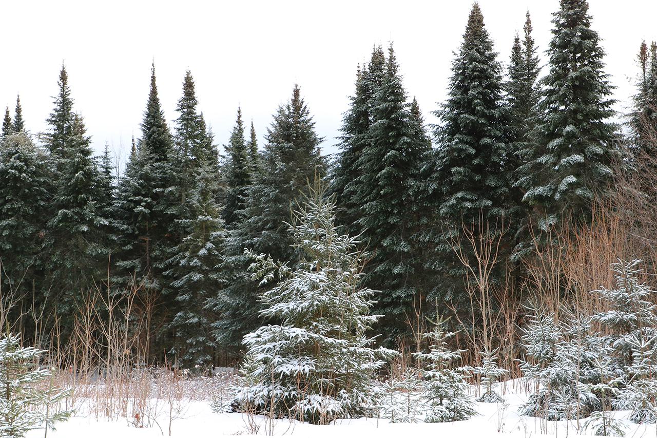 forest management VT0823_1_CC