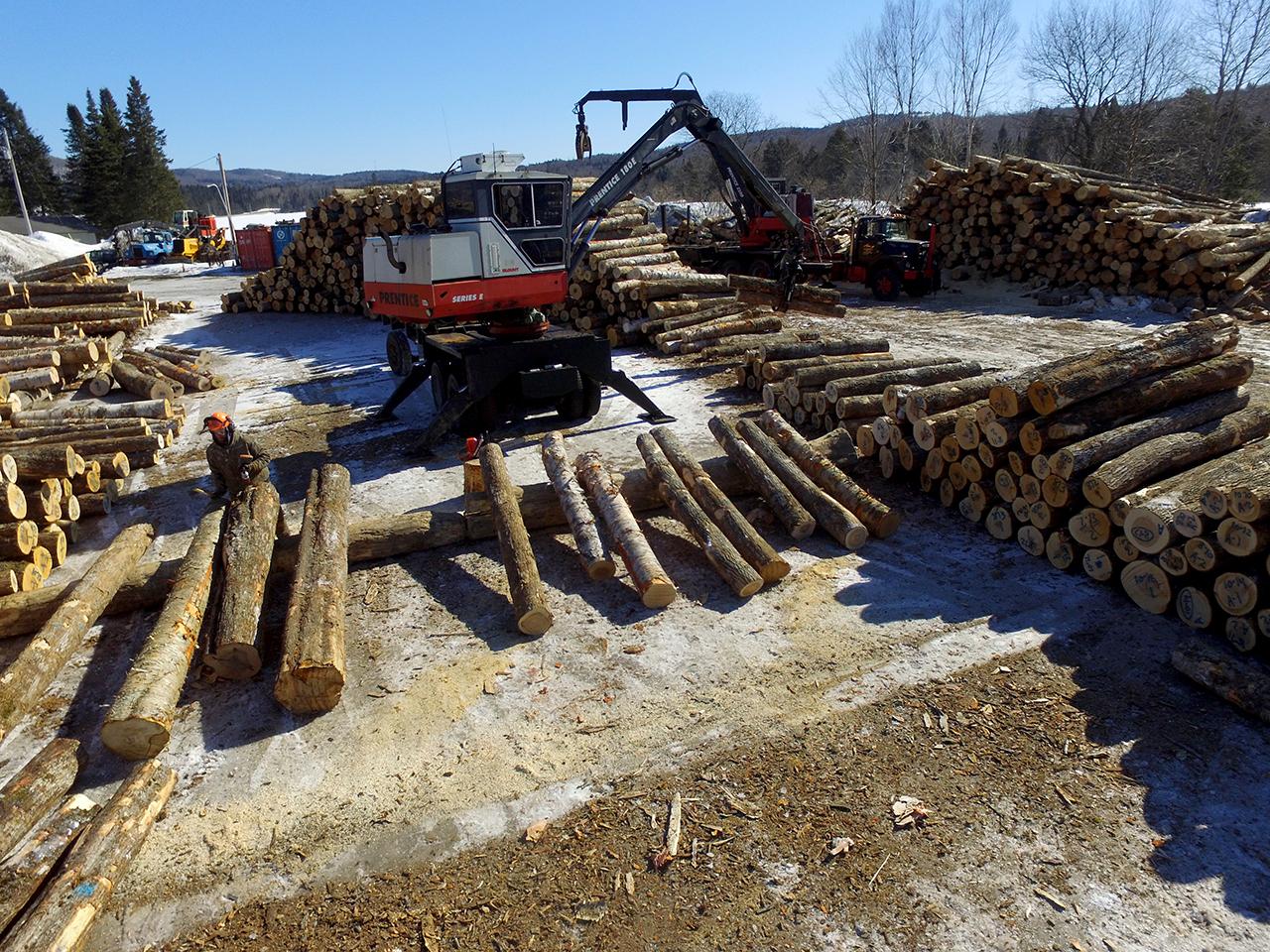 forest management DCIM103MEDIADJI_0017.JPG