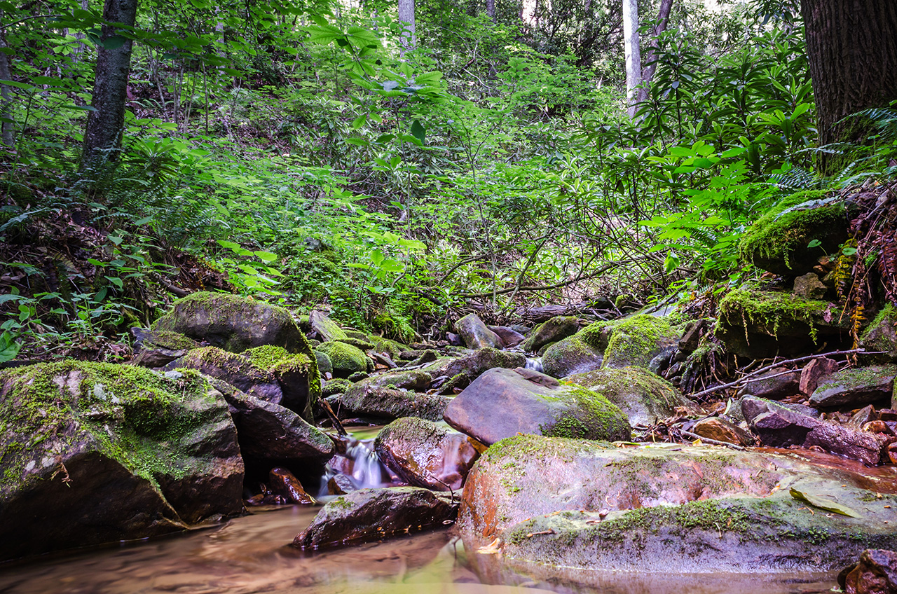 forest management LandVest - Straight Fork - Scott Co VA