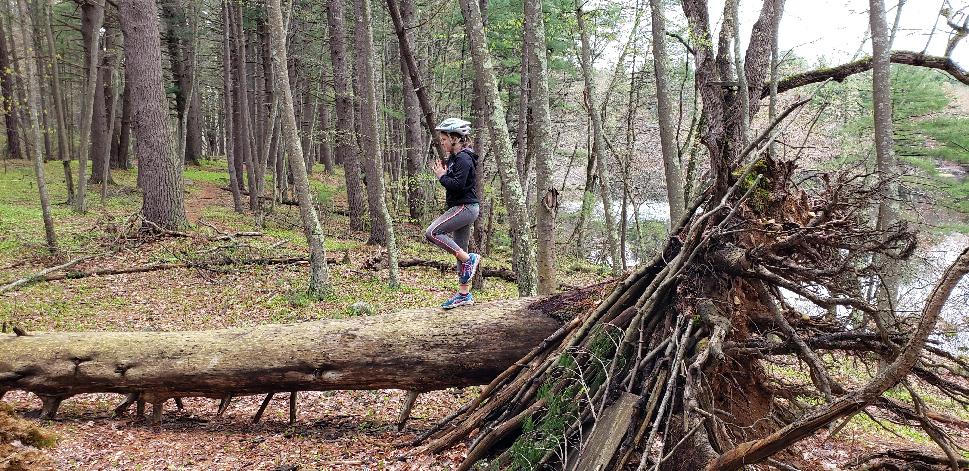 Concord - Estabrook tree balancing