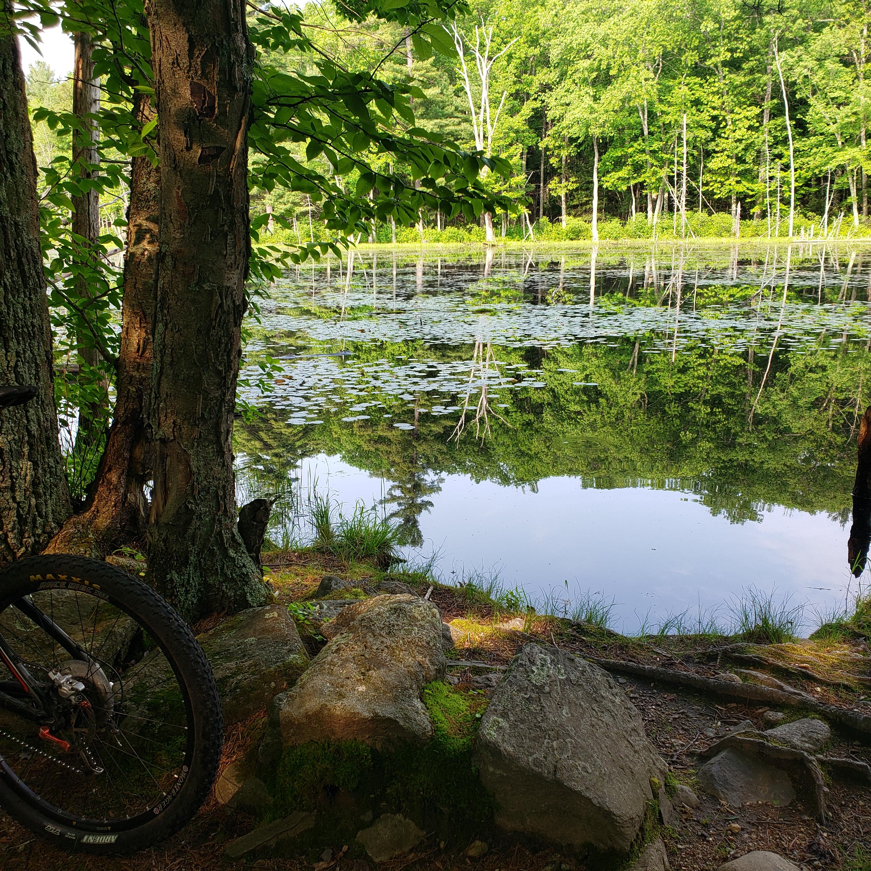 Concord - Mt biking Estabrook Woods