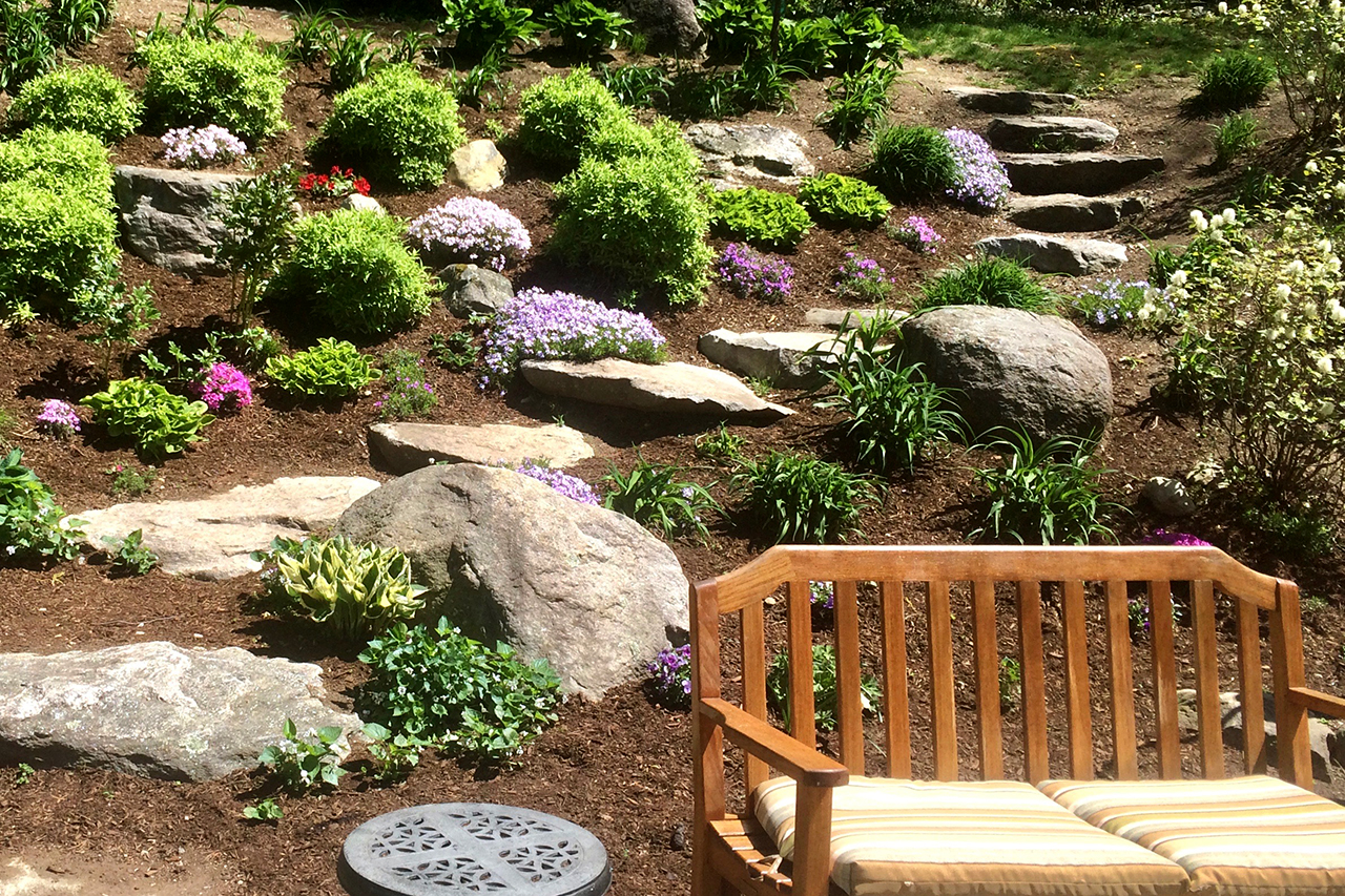 Spring -phlox in backyard_CC