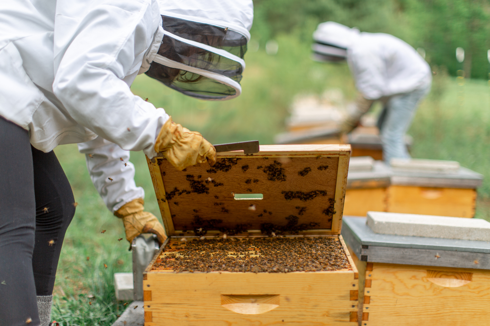 best bees_BourdonApiary20180519_194_web