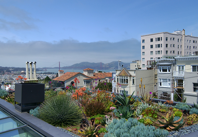1209 Filbert Street, San Francisco | Neal Ward - McGuire Real Estate