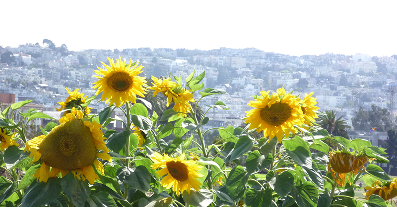 Community Gardens: A Bit of Heaven on Earth - Marina Times | Carole Isaacs - McGuire Real Estate