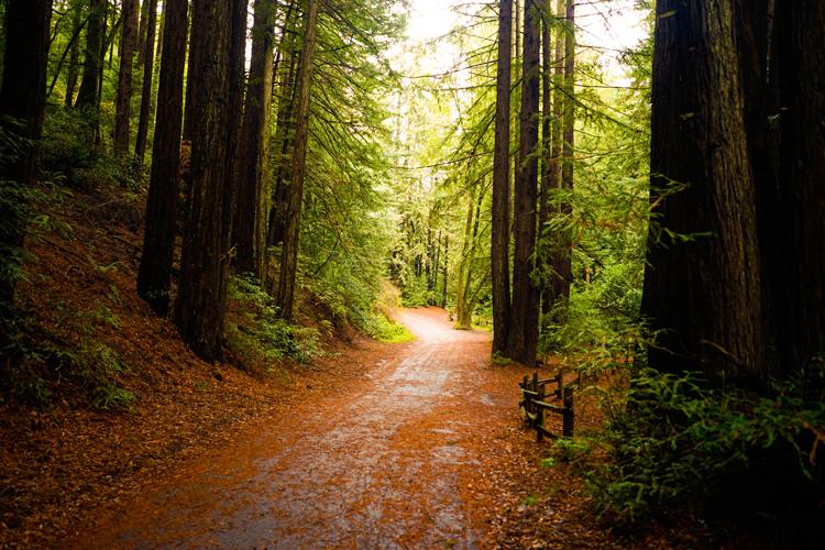 Redwood Regional Park Oakland