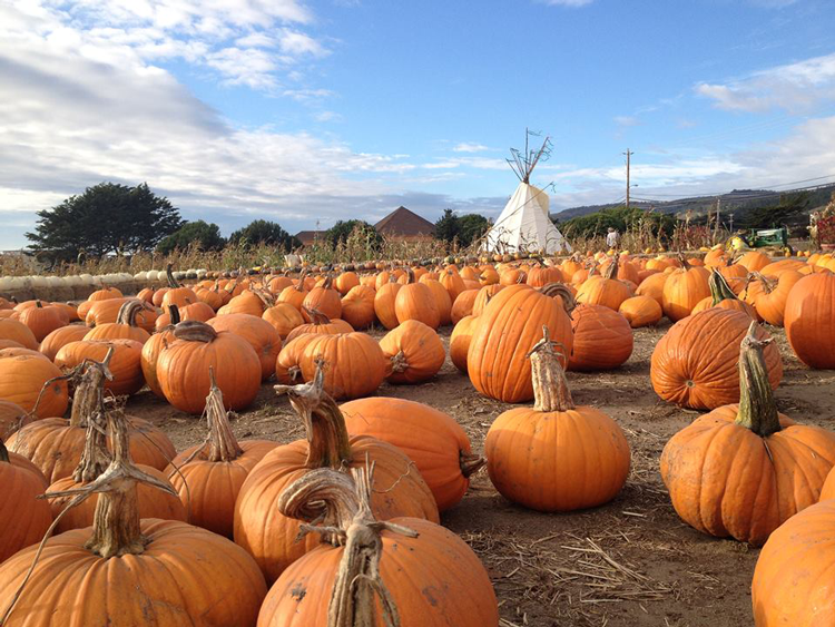 Pumpkin Patches In The Bay Area Interactive Map - Us farm locations interactive map