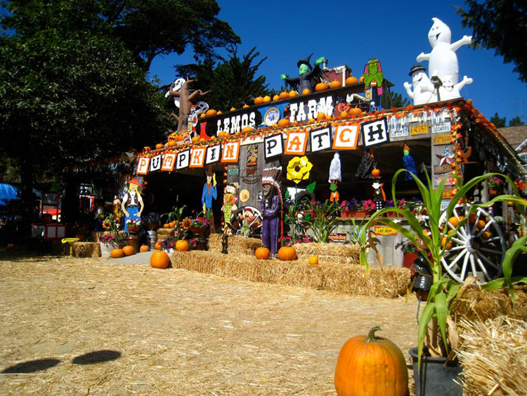Lemos Farm Pumpkin Patch Bay Area California