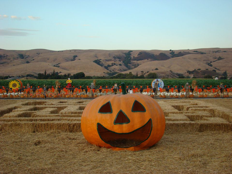 Spina Farms Pumpkin Patch Bay Area