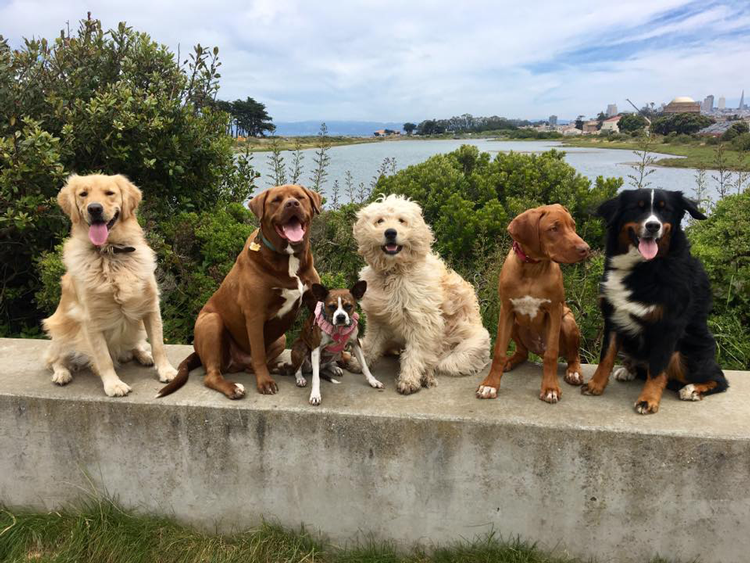 Citizen Hound Dog Walkers in San Francisco