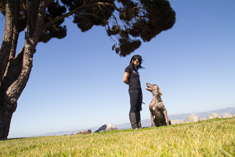 Refined K9 San Francisco Dog Trainers