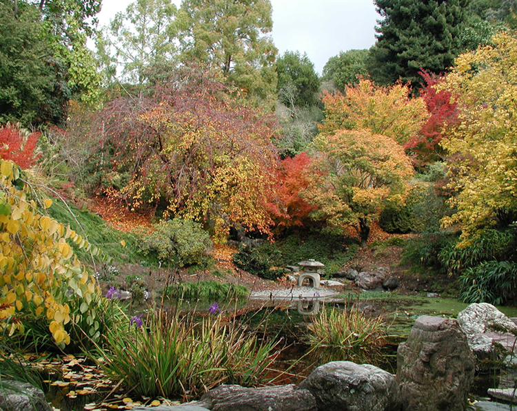 University Of California Berkeley Botanical Gardens Fall Foliage Color