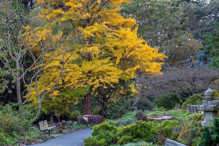 San Francisco Botanical Gardens Fall Color