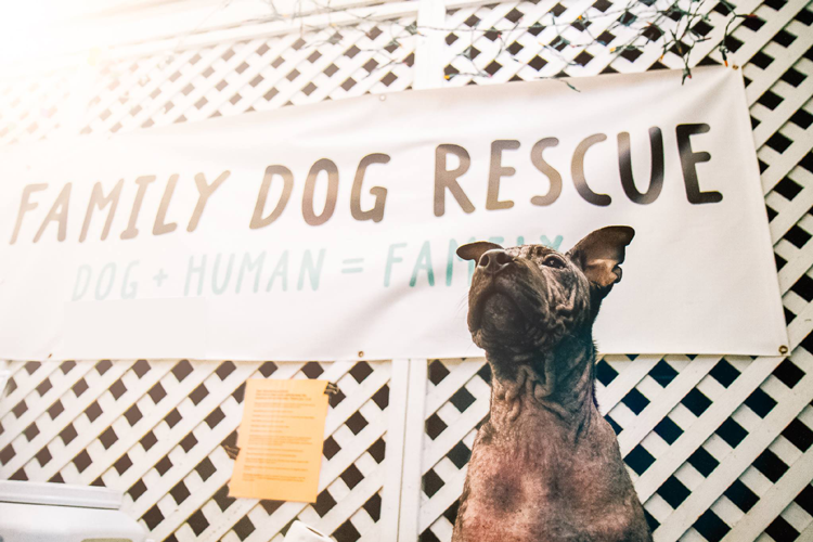 Family Dog Rescue San Francisco Bay Area nonprofit charity