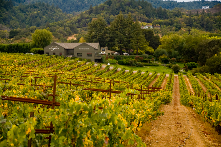 beautiful wineries in Sonoma County