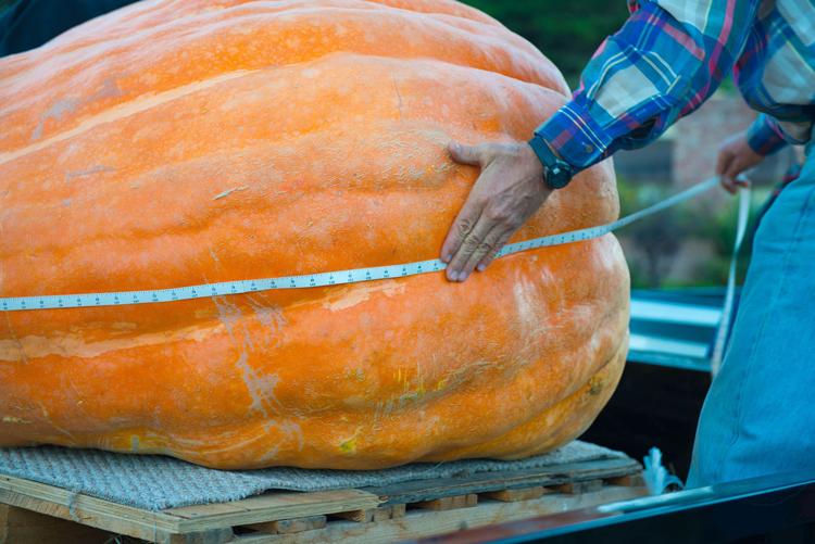 Half Moon Bay Pumpkin Festival heaviest pumpkin in america