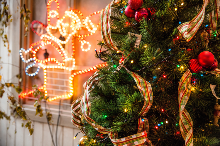 where to buy a Christmas tree in San Francisco Bay Area
