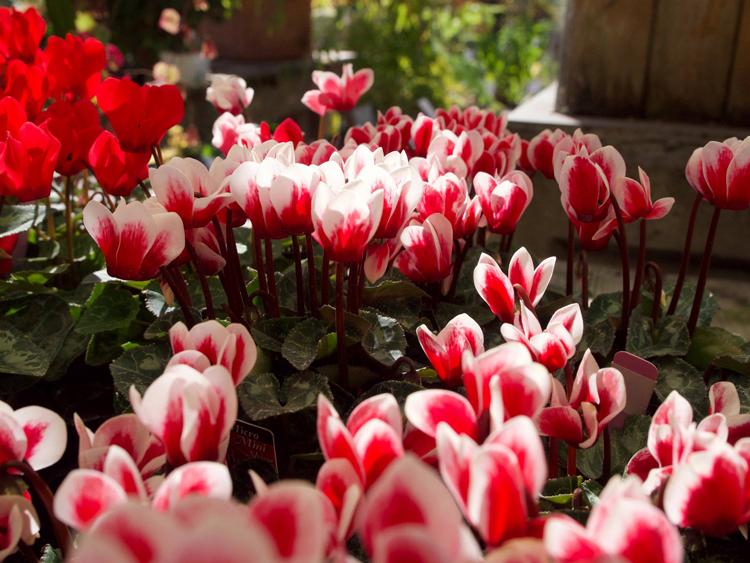 Berkeley Horticulture Bay Area garden centers and nurseries