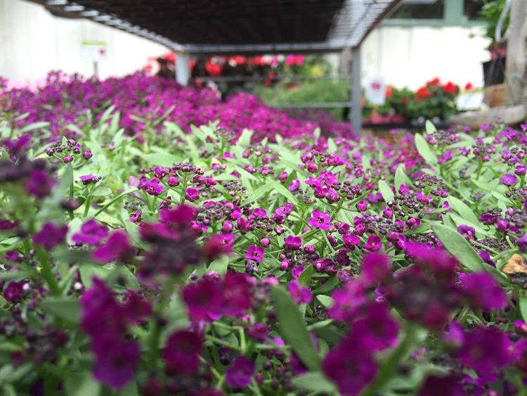 Flowercraft Bay Area garden centers and nurseries