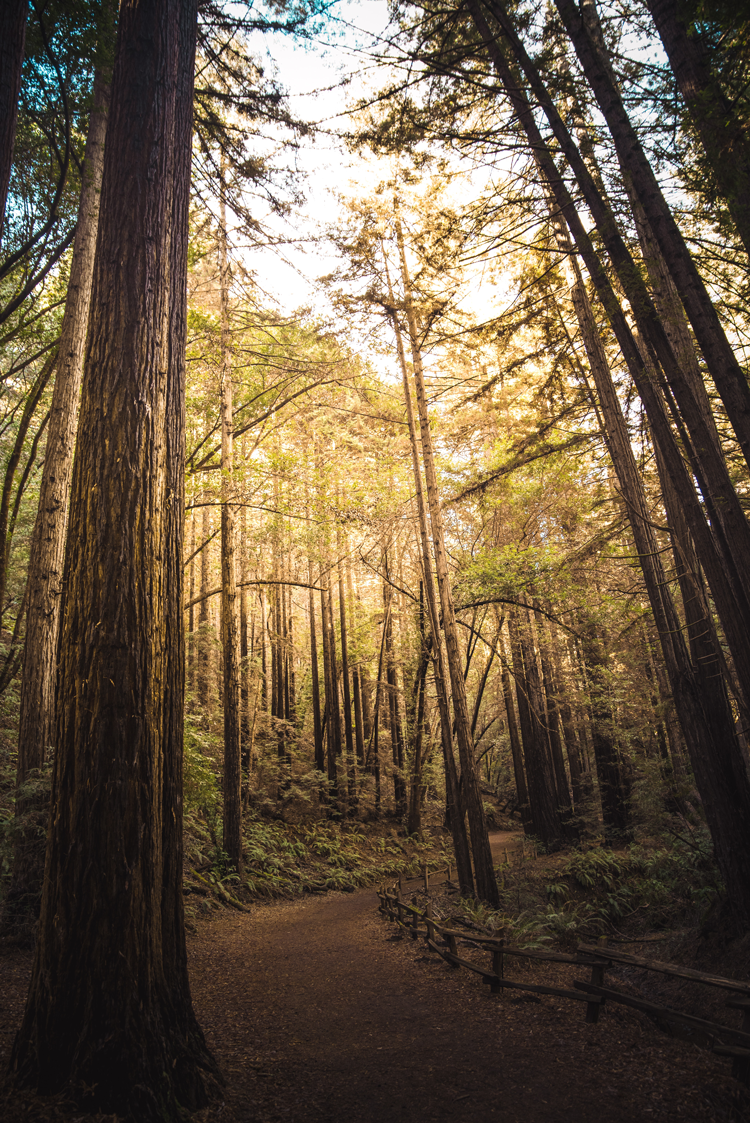 Redwood Regional Park parks and open spaces near San Francisco California