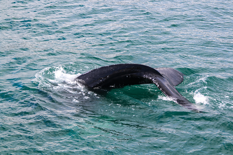 Whale Tours guided tours in San Francisco