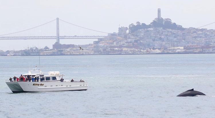 San Francisco Whale Tours Bay Area