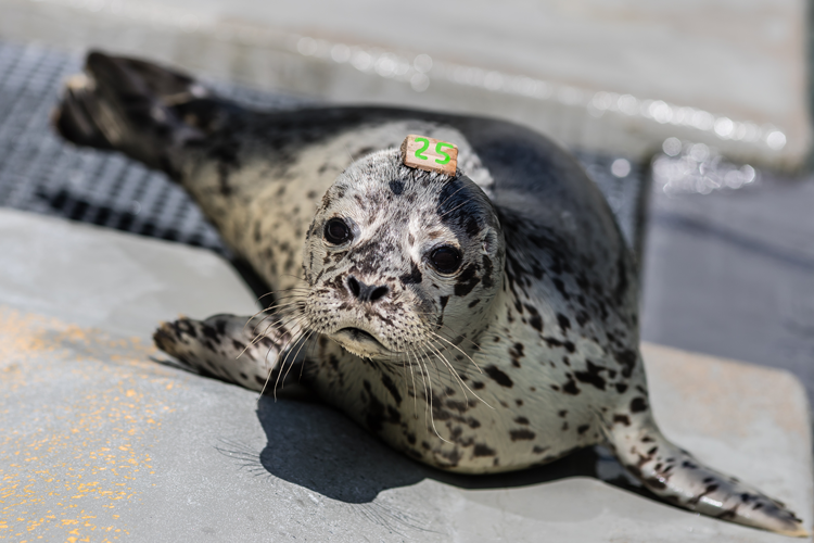 Marine Mammal Center kid-friendly activities in Marin County