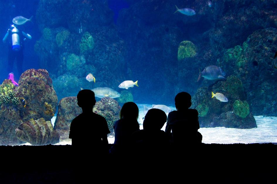 Denver Downtown Aquarium Denver Road Trip