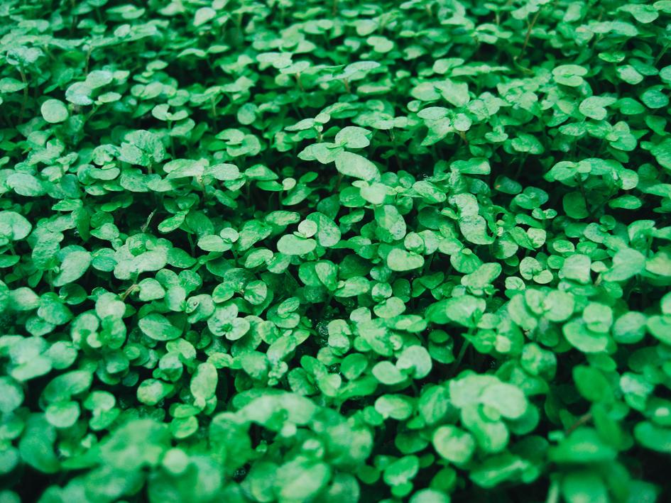 St. Patrick's Day Omaha