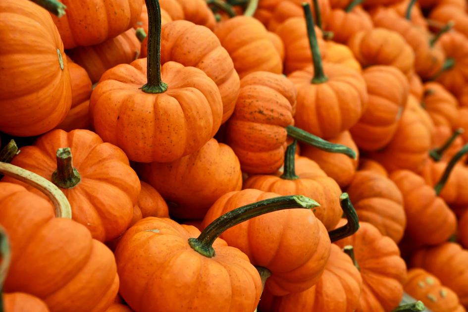 Pumpkin Fest Omaha