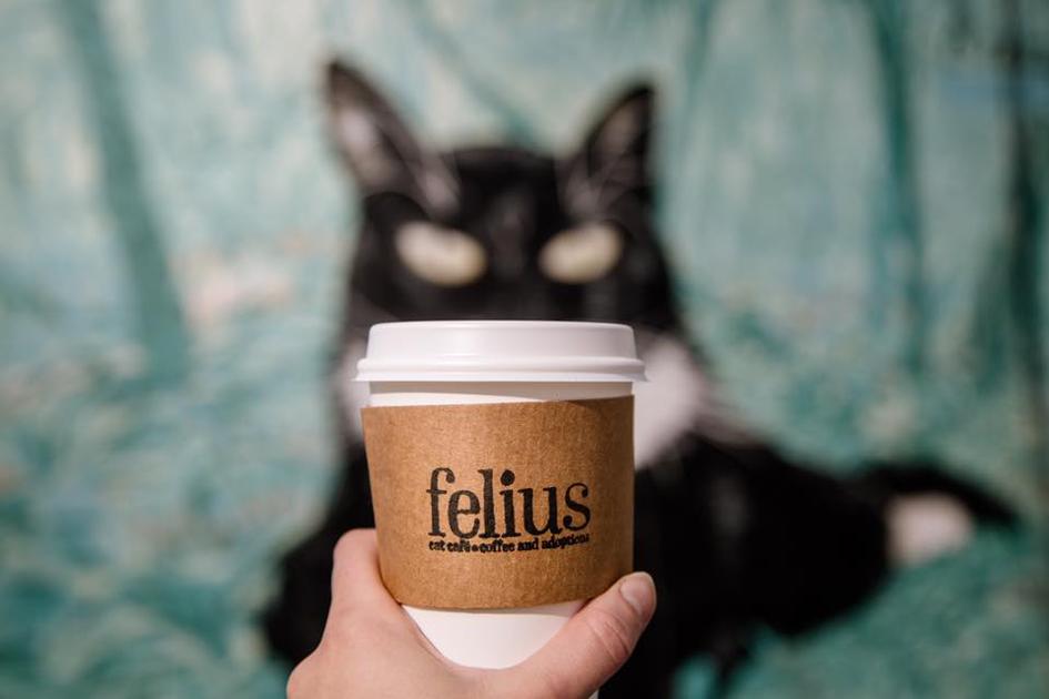 Felius Cat Cafe and Coffe Shop in Omaha Nebraska