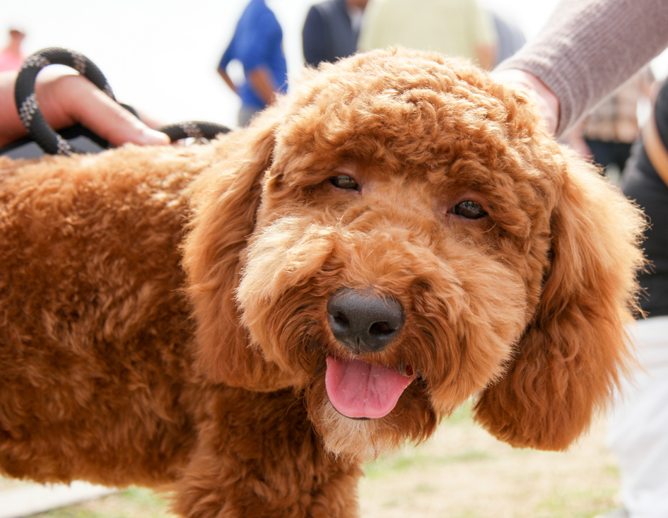 dog owners guide omaha nebraska