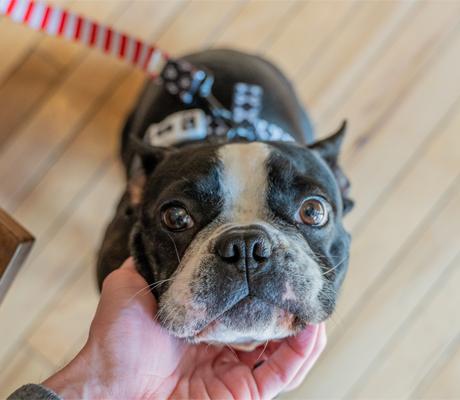 dog owner's guide to omaha nebraska