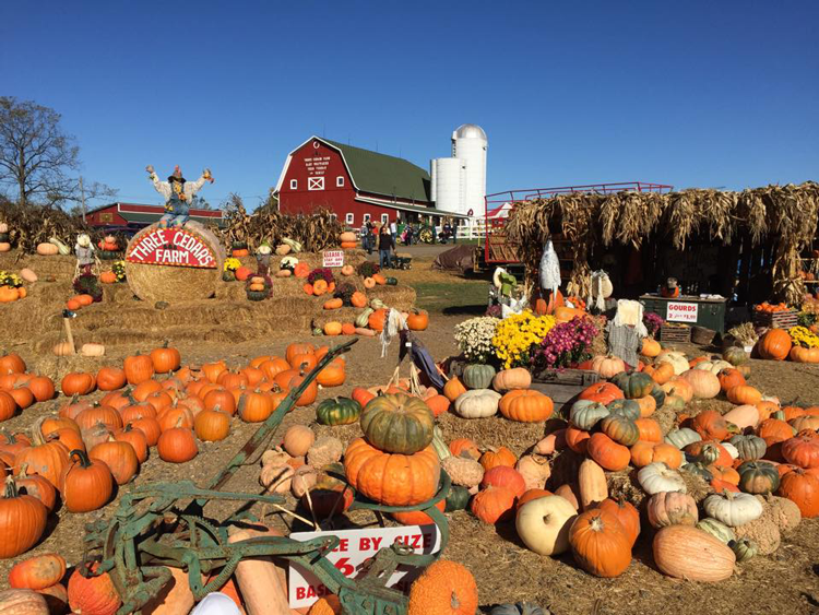 Three Cedars Farm pumpkin patches apple orchards near Ann Arbor Michigan