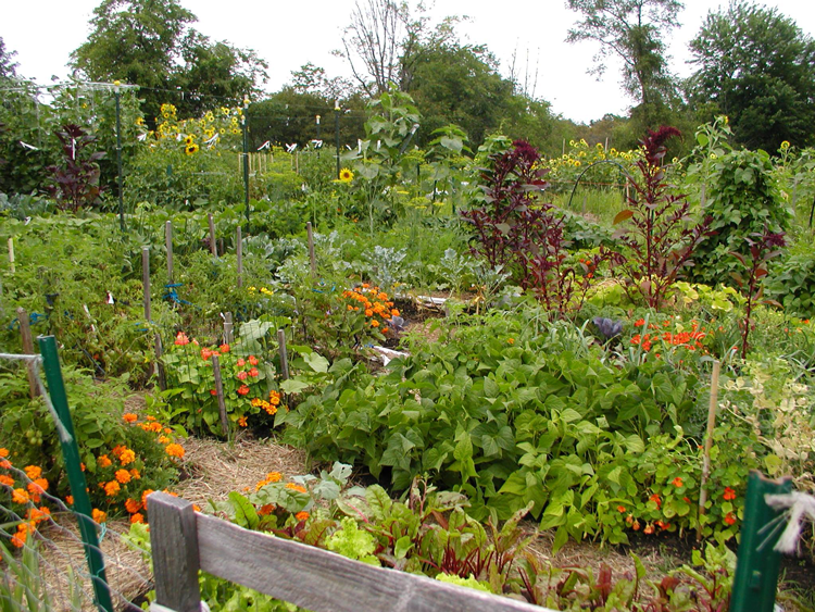 community gardens in the Ann Arbor area Michigan