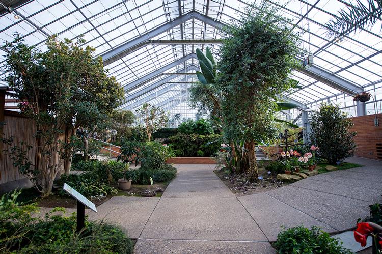 Indoor Conservatory at Matthaei Botanical Gardens