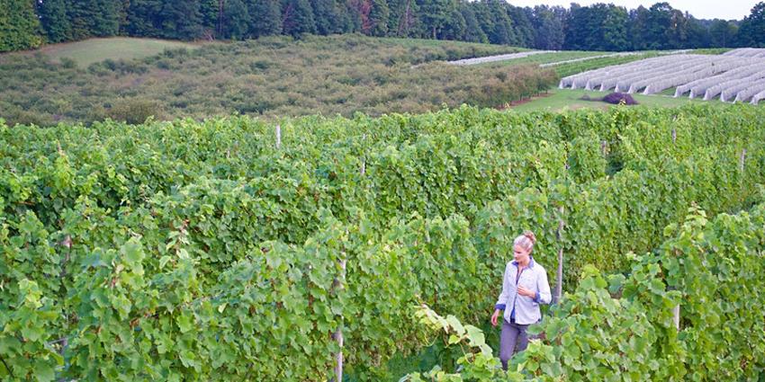 Women-in-Wine