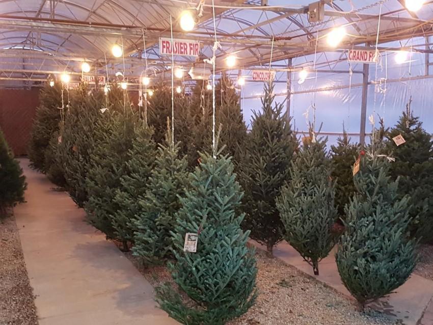 2020 Magical Christmas trees