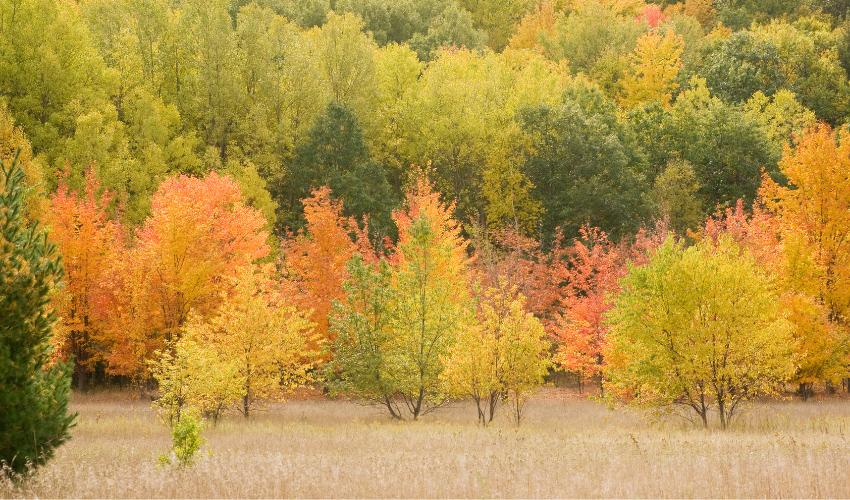 Leelanau, Michigan in the Fall