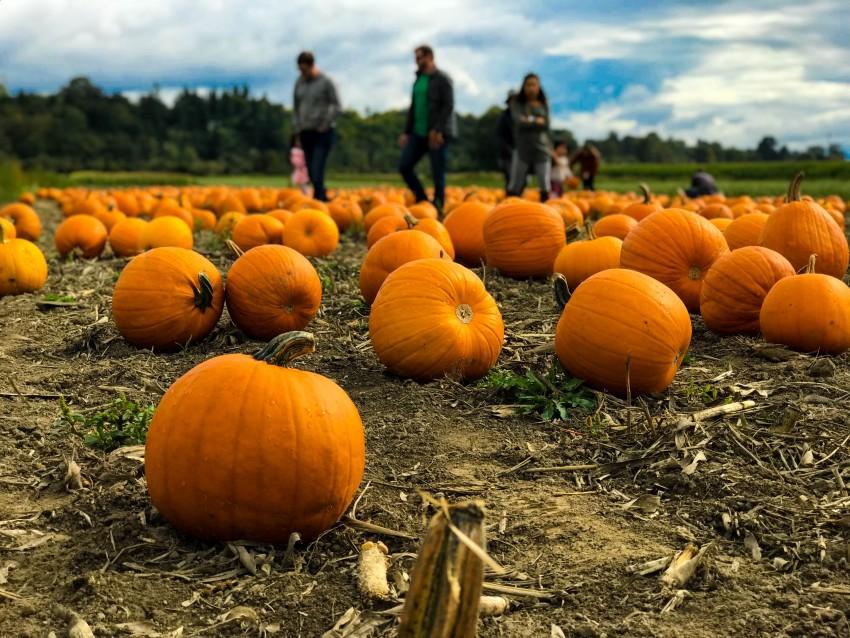 Fall in Ann Arbor Kid Activities