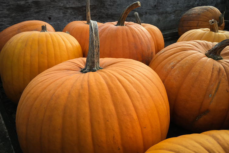 Pumpkin patches in the toledo area [interactive map].